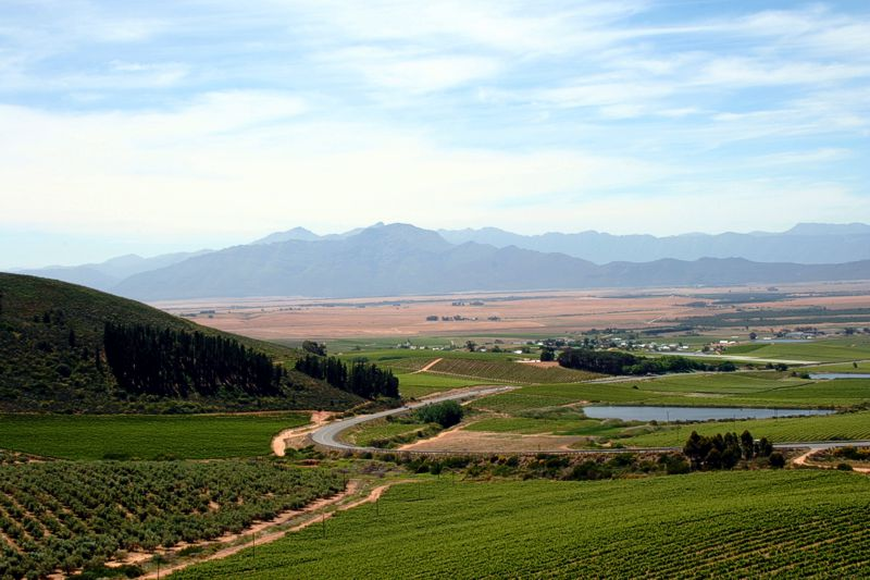 riebeek-cellars-wines-07